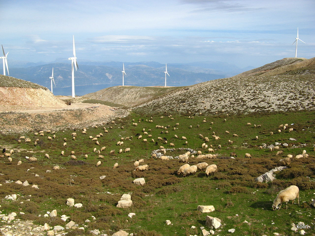 Windfarm & sheep grazing in Panachaiko Mountains, Greece - photo found on Wiki Commons and attributable to Koliri