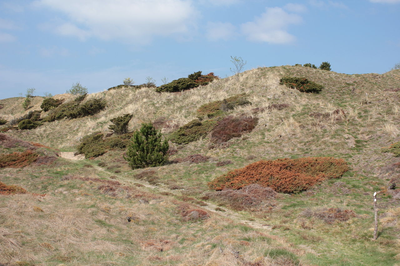 Dune Heath landscape of Jylland, photograph by Laketown and released through Wiki Commons