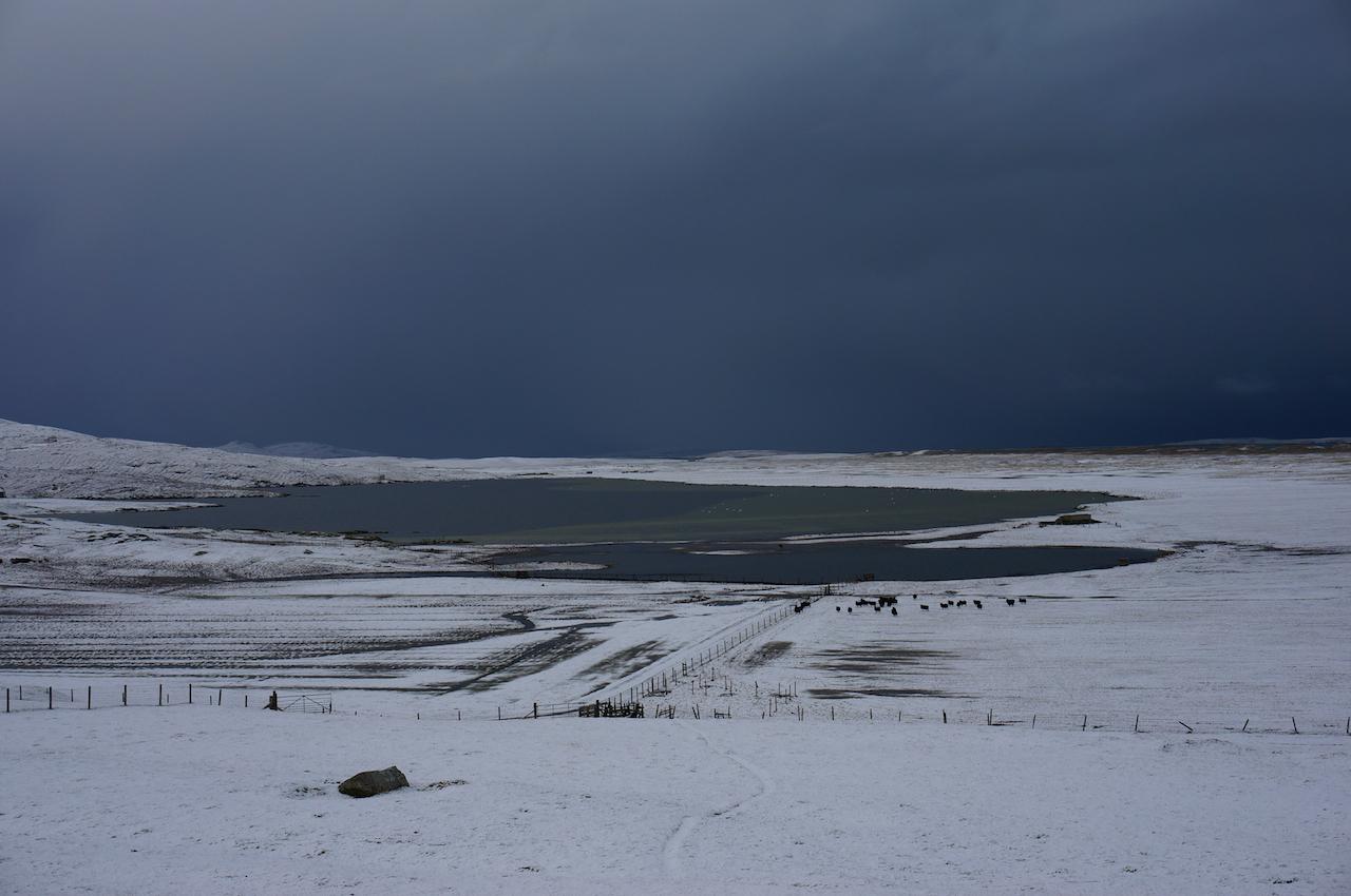 Hebridean sheep on the Isle of Berneray winter machair