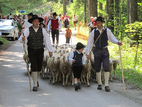 'Sheep Ball (second Sunday in August) is the oldest Slovenian ethnographic event, which revives the lifestyle and customs of herdsmen and dairymaids. Here you can see the return of sheep from their pastures in the mountains, sheep shearing, wool processing and you can also try traditional herdsmen food' - image found here