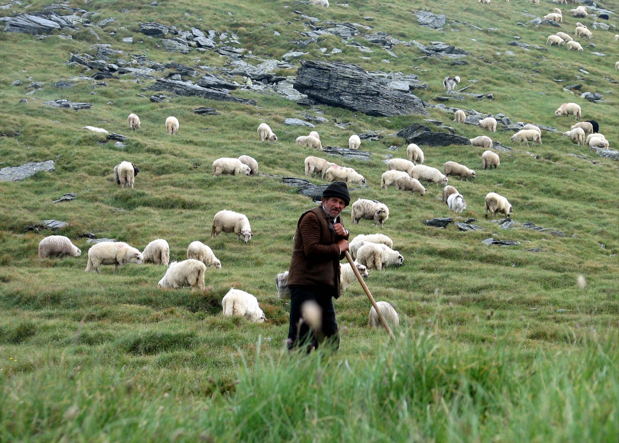 Shepherd in Făgăraş Mountains, Romania - photo found on Wiki Commons and attributable to friend of Darwinek