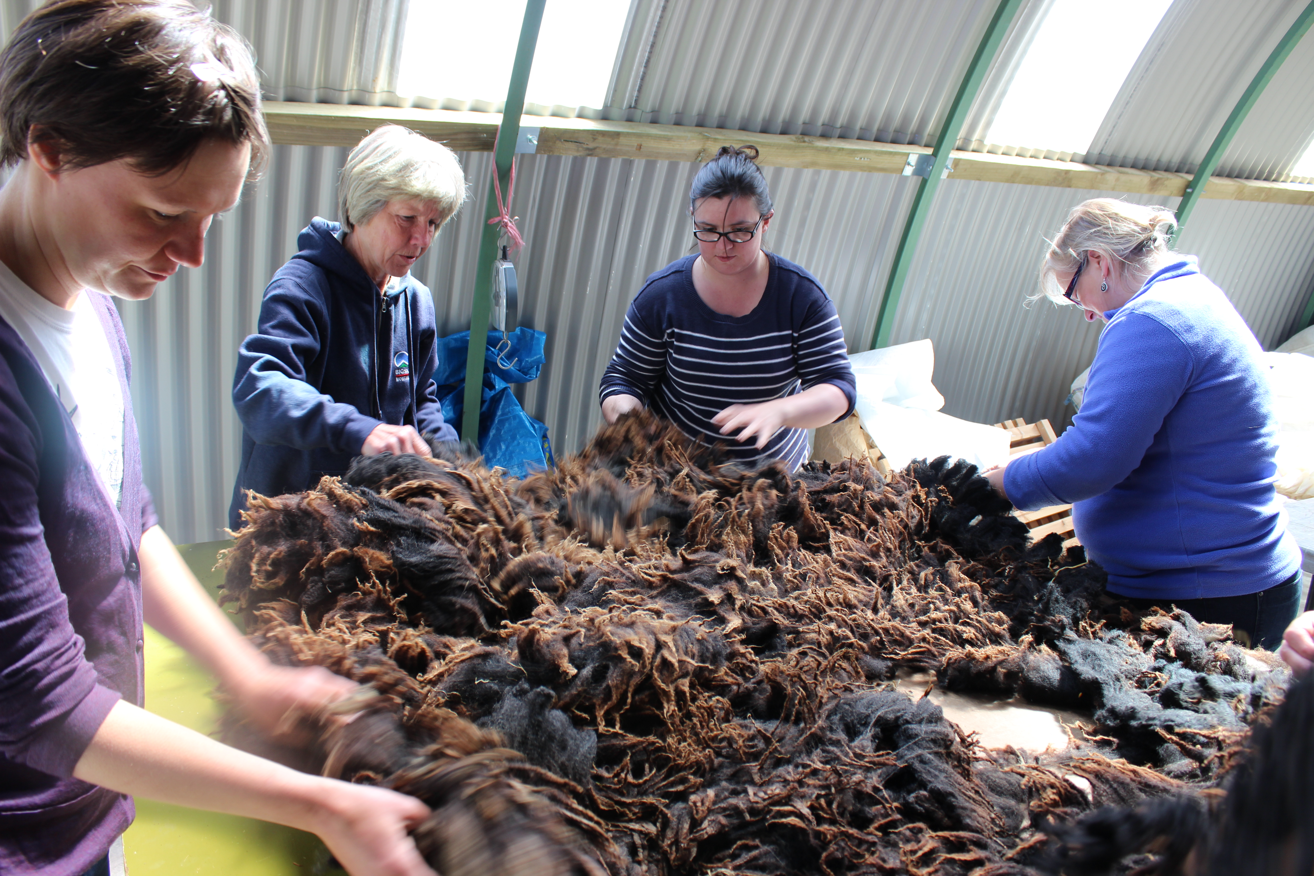 CALANAS trainees grading and sorting in the new wool shed in 2015